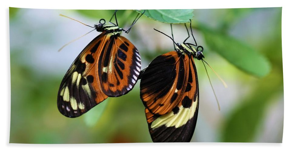 Butterfly Bath Sheet featuring the photograph Butterfly 2 by Kristina Jones