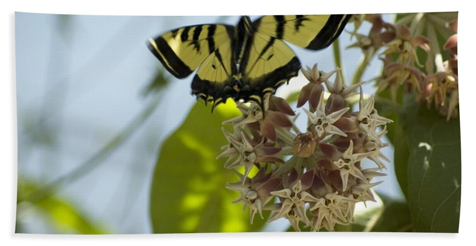 Butterfly Hand Towel featuring the photograph Butterfly 2 by Sara Stevenson