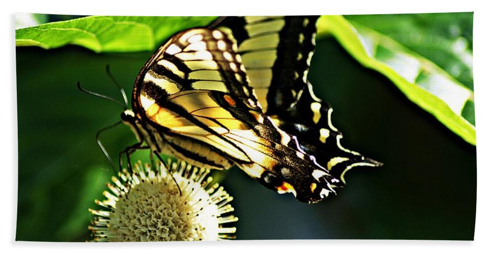 Butterfly Bath Sheet featuring the photograph Butterfly 4 by Joe Faherty