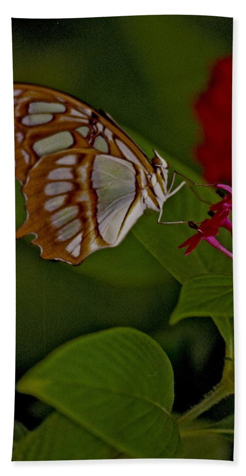 Butterfly Hand Towel featuring the photograph Butterfly 4 by Michael Peychich