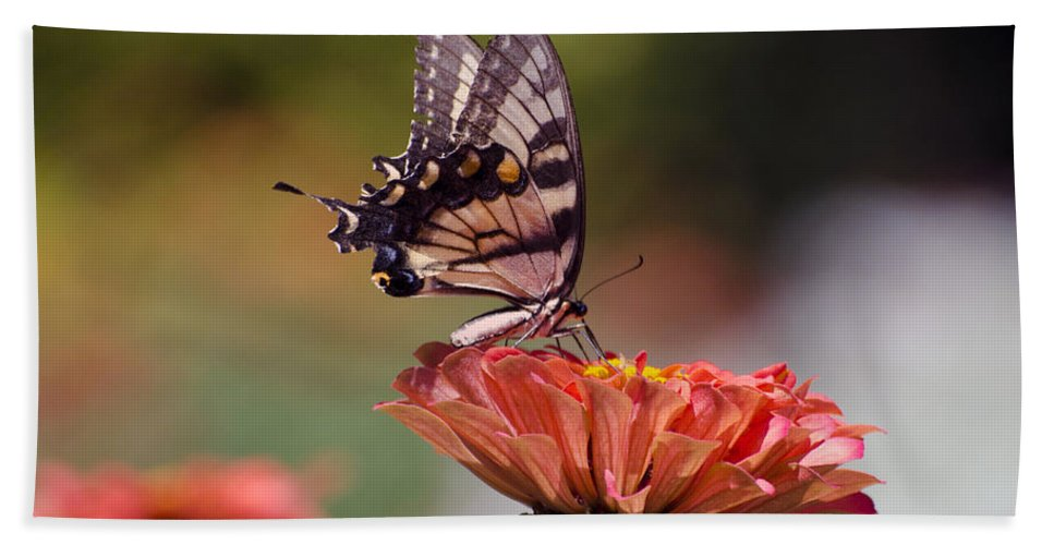 Butterfly Bath Sheet featuring the photograph Butterfly And Orange Zinnia by Terri Winkler