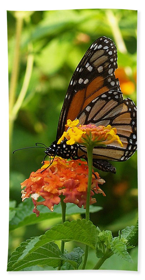Ann Keisling Hand Towel featuring the photograph Butterfly Beauty by Ann Keisling