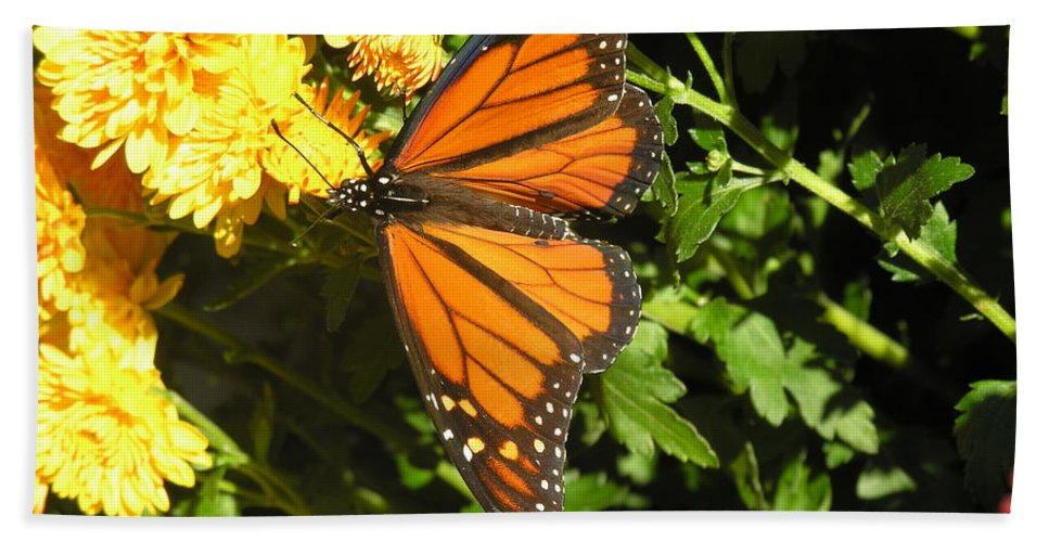 Butterfly Hand Towel featuring the photograph Butterfly by Diane Greco-Lesser