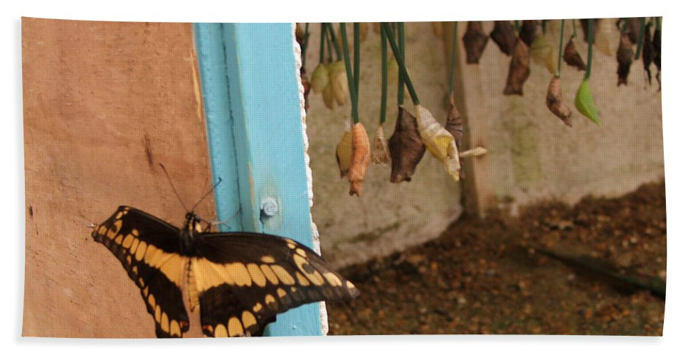 Butterfly Hand Towel featuring the photograph Butterfly Drying His New Wings by Heather Lennox