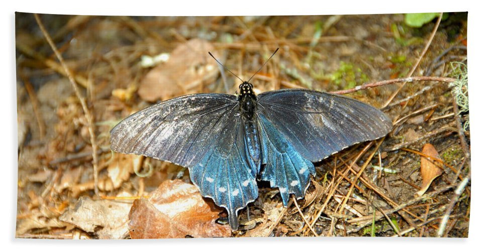 Butterfly Hand Towel featuring the photograph Butterfly In The Forest by David Lee Thompson