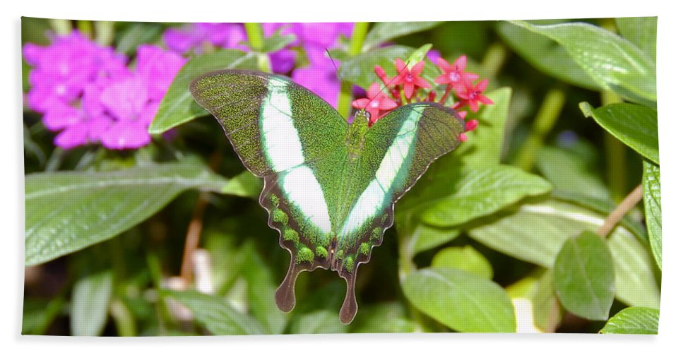 Garden Hand Towel featuring the photograph Butterfly In The Garden by David Lee Thompson