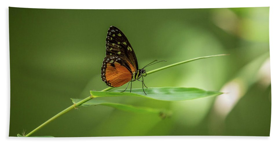 Butterfly Bath Towel featuring the photograph Golden Helicon Butterfly by Jimmy Tran