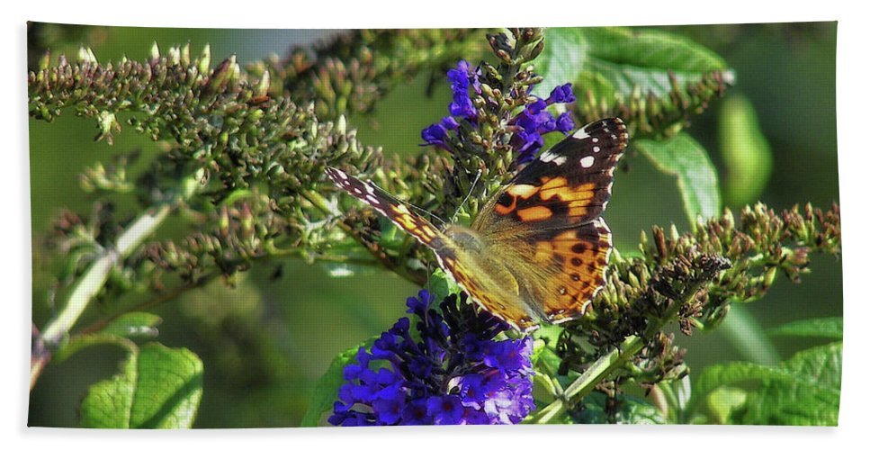 Butterfly Bath Sheet featuring the photograph Butterfly Joy by JAMART Photography