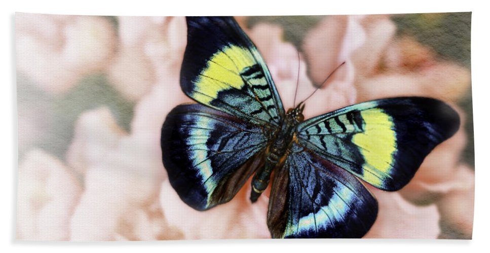 Panacea Prola Hand Towel featuring the photograph Butterfly Kisses by Janet Fikar