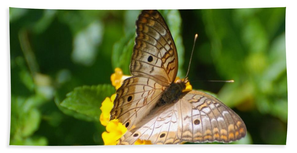 Butterfly Hand Towel featuring the photograph Butterfly Land by Rob Hans