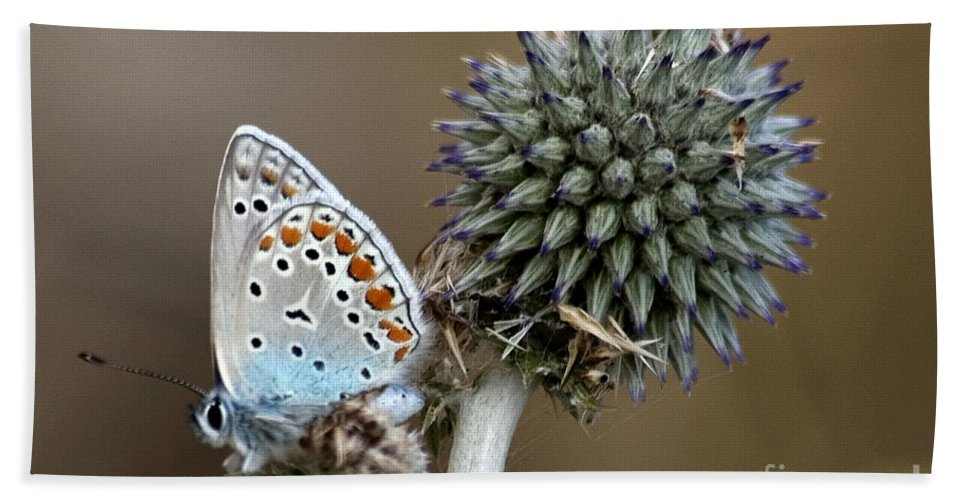 Butterfly Bath Towel featuring the photograph butterfly on a Echinops adenocaulon by Nahum Budin