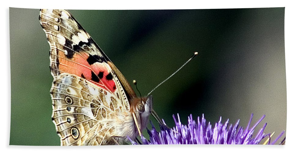 Butterfly Hand Towel featuring the photograph butterfly on a Silybum marianum I by Nahum Budin