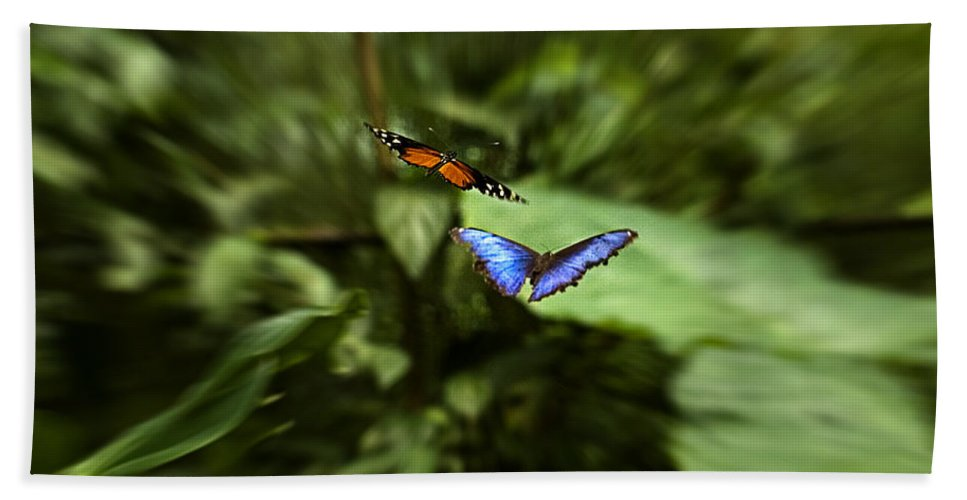 Wildlife Hand Towel featuring the photograph Butterfly Race by Patricia Bolgosano