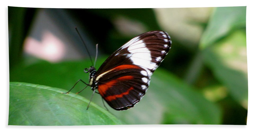Butterfly Bath Sheet featuring the photograph Butterfly by Sherri Williams