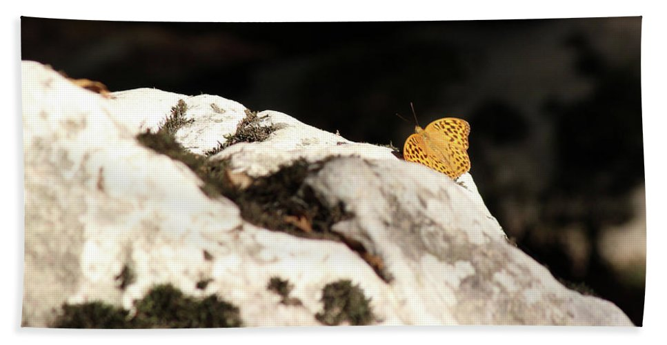 Butterfly Hand Towel featuring the photograph Butterfly Standing On Rock by Goce Risteski
