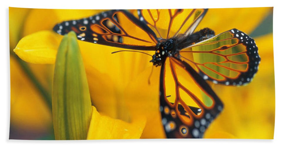 Butterfly Hand Towel featuring the digital art Butterfly by Tim Allen
