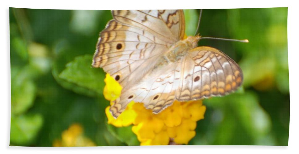 Butterfly Hand Towel featuring the photograph Butterflywith Dots by Rob Hans