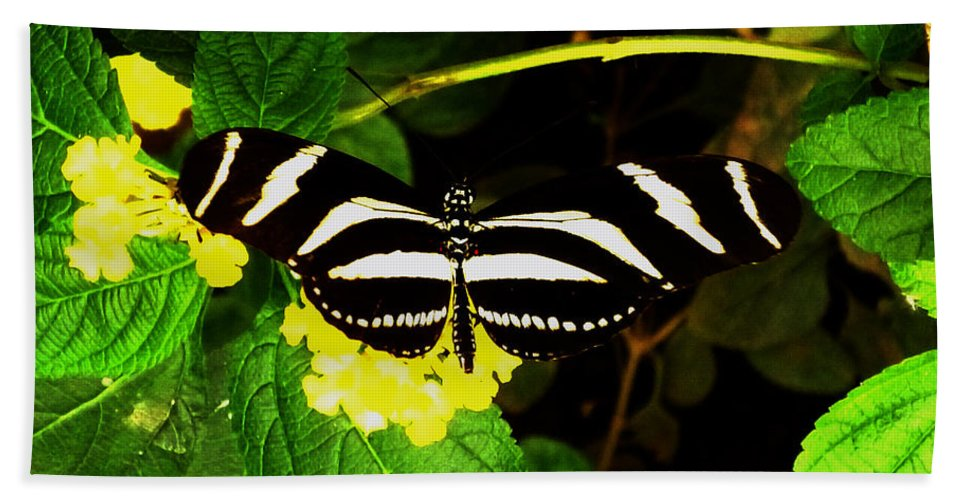 Butterfly Hand Towel featuring the photograph Butterly by Laura Greco