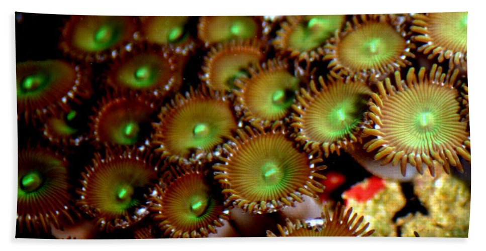 Underwater Bath Towel featuring the photograph Button Polyps by Anthony Jones