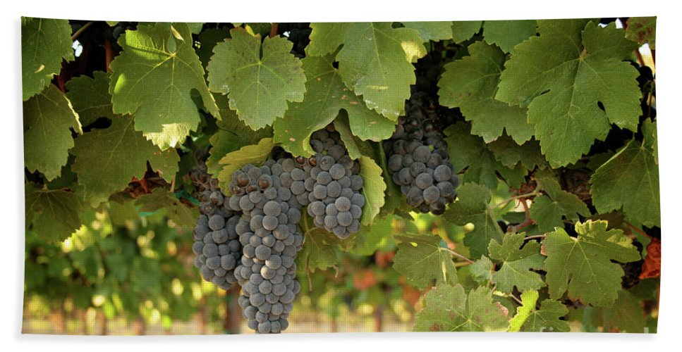 Red Grapes Bath Sheet featuring the photograph Cabernet Grapes One by Brooke Roby