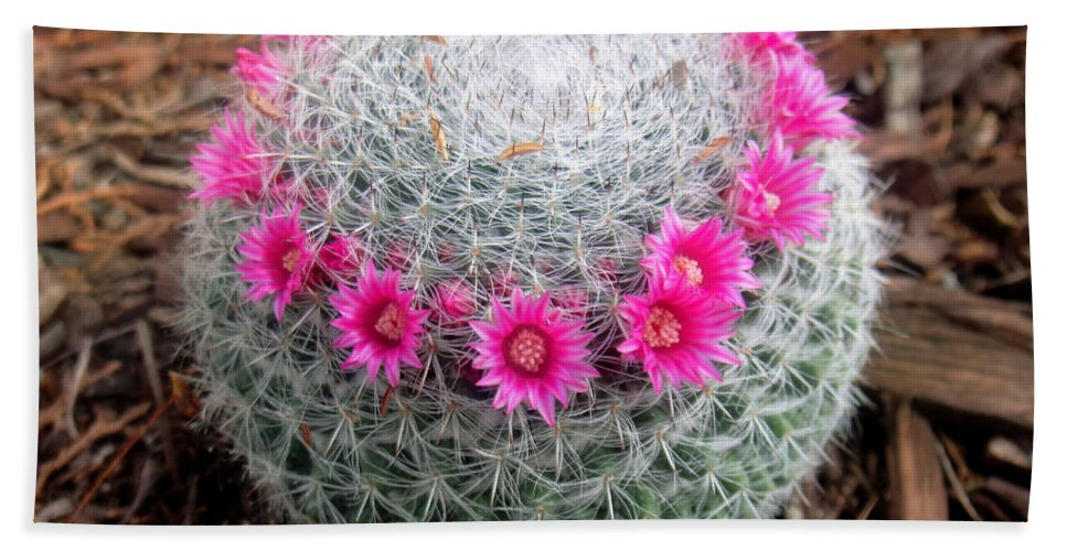 Cactus ball with pink flowers hand towel for sale by sofia metal queen cactus hand towel featuring the photograph cactus ball with pink flowers by sofia metal queen mightylinksfo