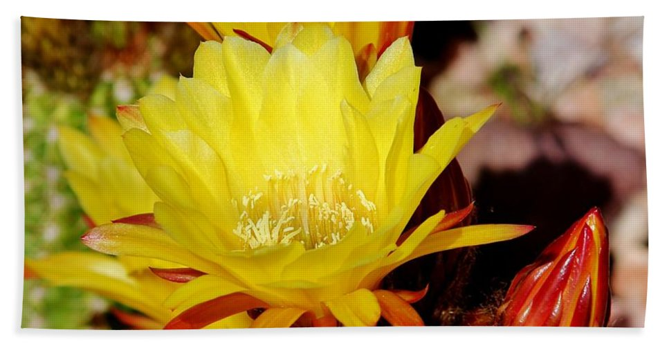 Cactus Bath Sheet featuring the photograph Cactus Bloom In Yellow 050715ab by Edward Dobosh