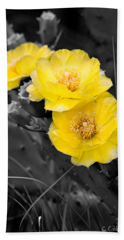 Cactus Bath Sheet featuring the photograph Cactus Blossom by Christopher Holmes