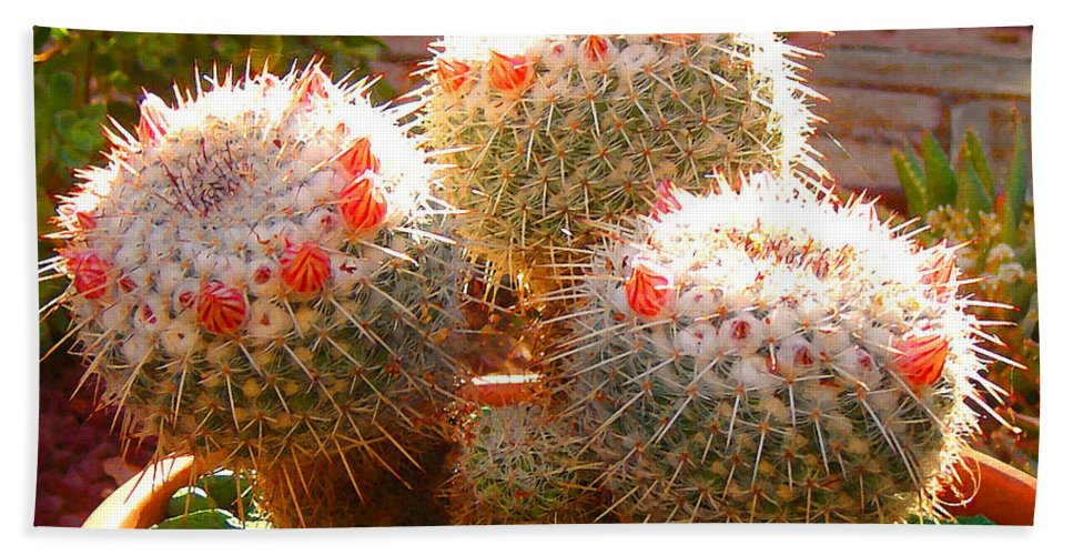 Landscape Hand Towel featuring the photograph Cactus Buds by Amy Vangsgard
