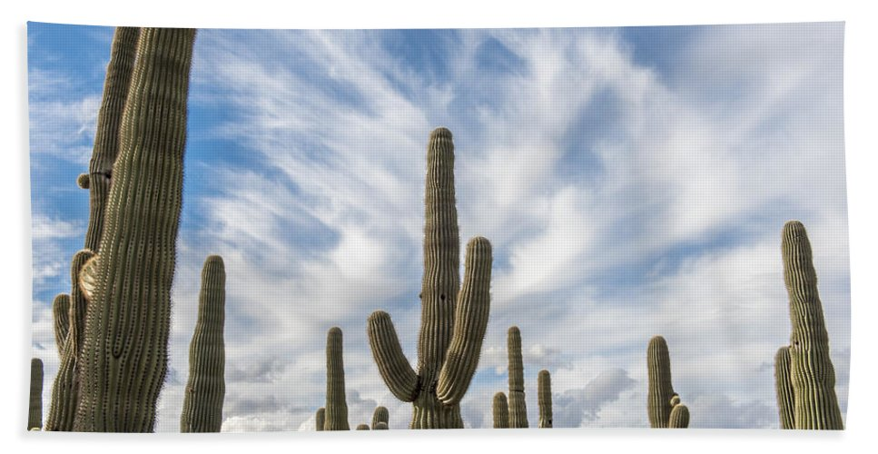 Desert Cactus Hand Towel featuring the photograph Cactus Choir by Jon Berghoff