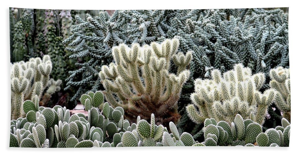 Cactus Hand Towel featuring the photograph Cactus Field by Rebecca Margraf