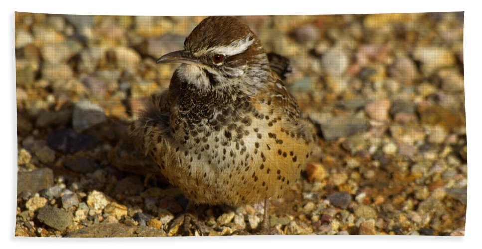 Peterson Hand Towel featuring the photograph Cactus Wren by James Peterson