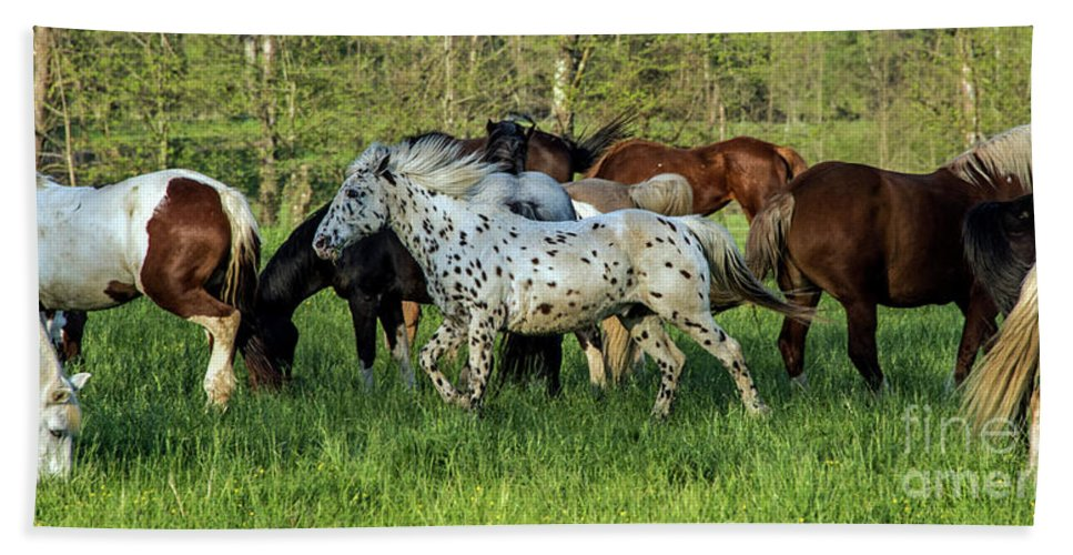 Smoky Mountains Hand Towel featuring the photograph Cades Cove Horses by Bernd Billmayer