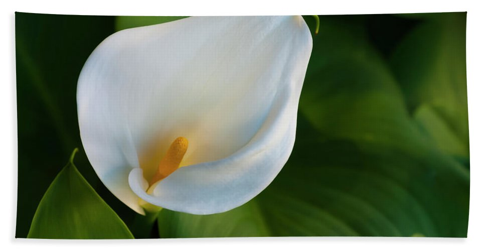 Flower Bath Sheet featuring the photograph Cala Lily by Dennis Reagan