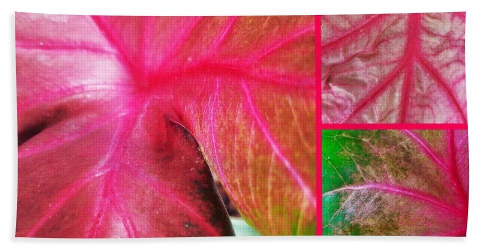 Caladium Red Trio Hand Towel featuring the photograph Caladium Red Trio by Maria Urso