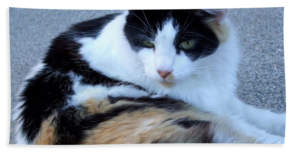 Kauai Animals Hand Towel featuring the photograph Calico 3 by Mary Deal