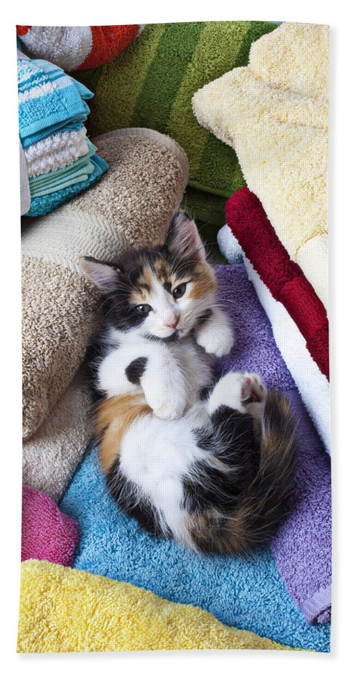 Calico Kitten Soft Towels Cat Bath Sheet featuring the photograph Calico Kitten On Towels by Garry Gay