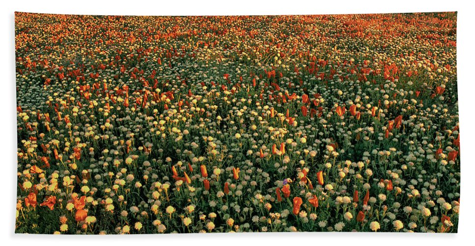 California Poppies Bath Towel featuring the photograph California Poppies At Dawn Lancaster California by Dave Welling