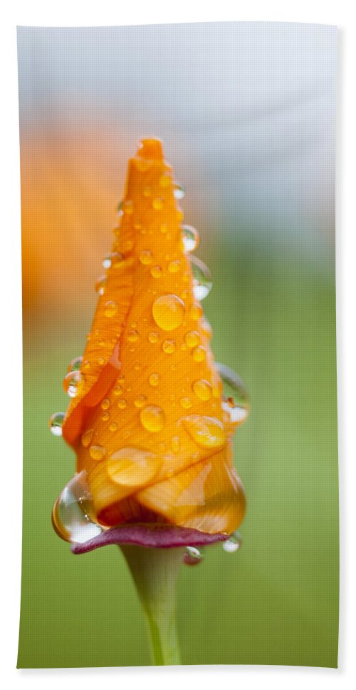 Rain Hand Towel featuring the photograph California Poppy In The Rain by Robert Potts