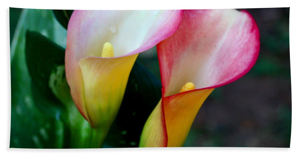 Calla Lily Bath Towel featuring the photograph Calla Lily Twins by Paul Anderson