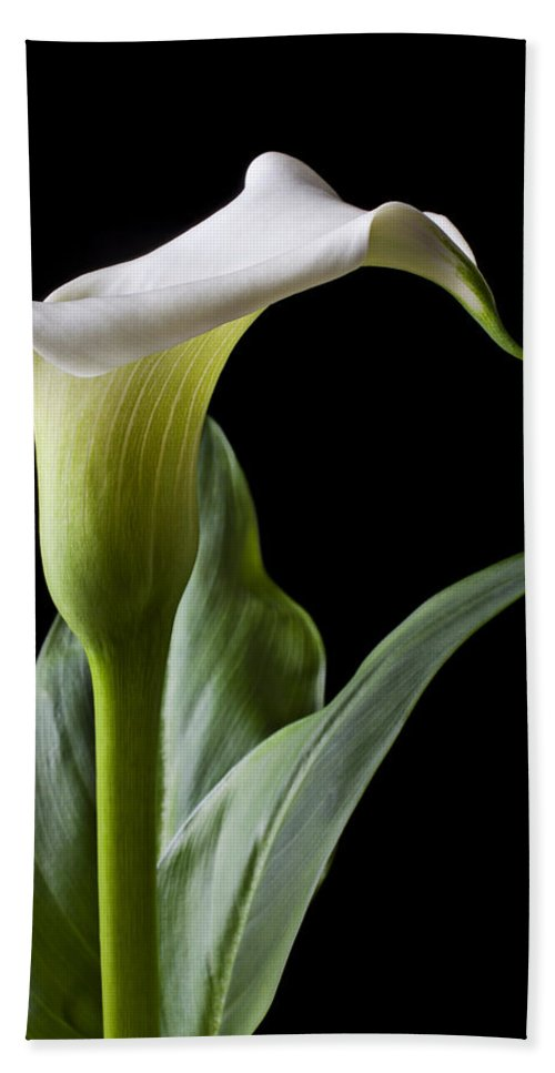 Calla Lily Bath Sheet featuring the photograph Calla Lily With Drip by Garry Gay