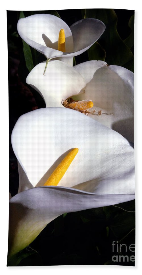 Nature Bath Towel featuring the photograph Calla Trio by Norman Andrus