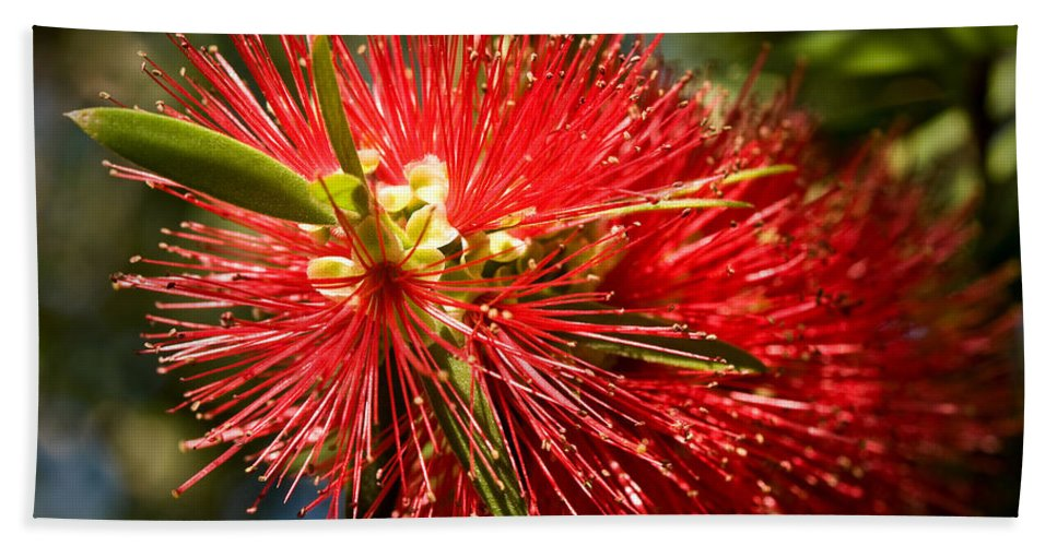 Callistemon Hand Towel featuring the photograph Callistemon by Steven Sparks