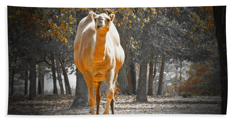 Camel Hand Towel featuring the photograph Camel by Douglas Barnard