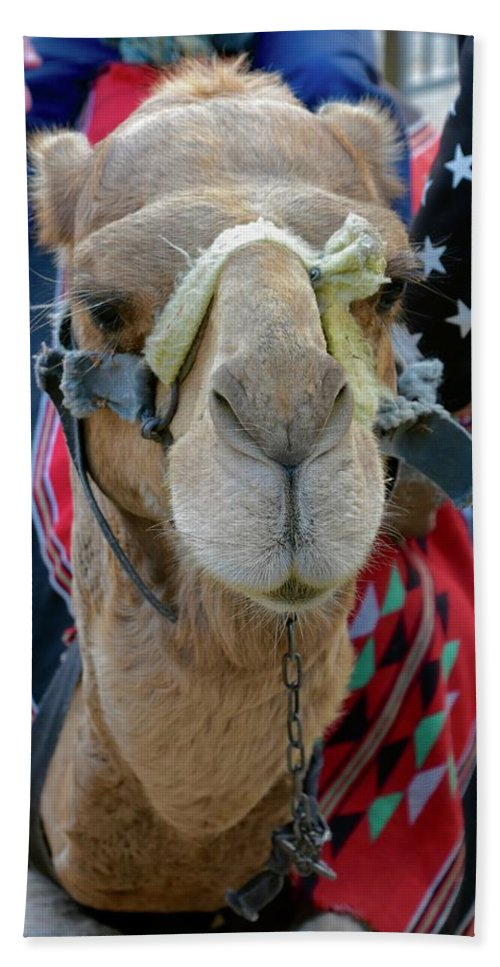 Camel Hand Towel featuring the photograph Camel Ride by Barbara Stellwagen