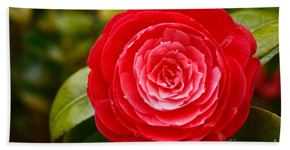 Azores Hand Towel featuring the photograph Camellia Japonica by Gaspar Avila
