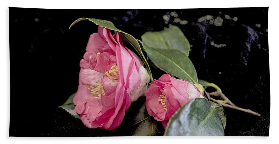 Camellia Hand Towel featuring the photograph Camellia Still Life by Kay Brewer