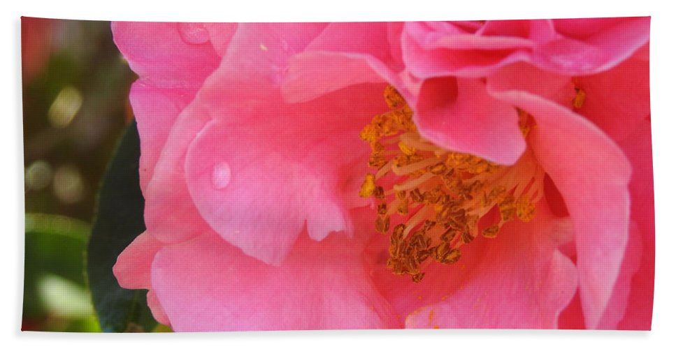 Flowers Bath Sheet featuring the photograph Camellias Of The South by Jan Gelders