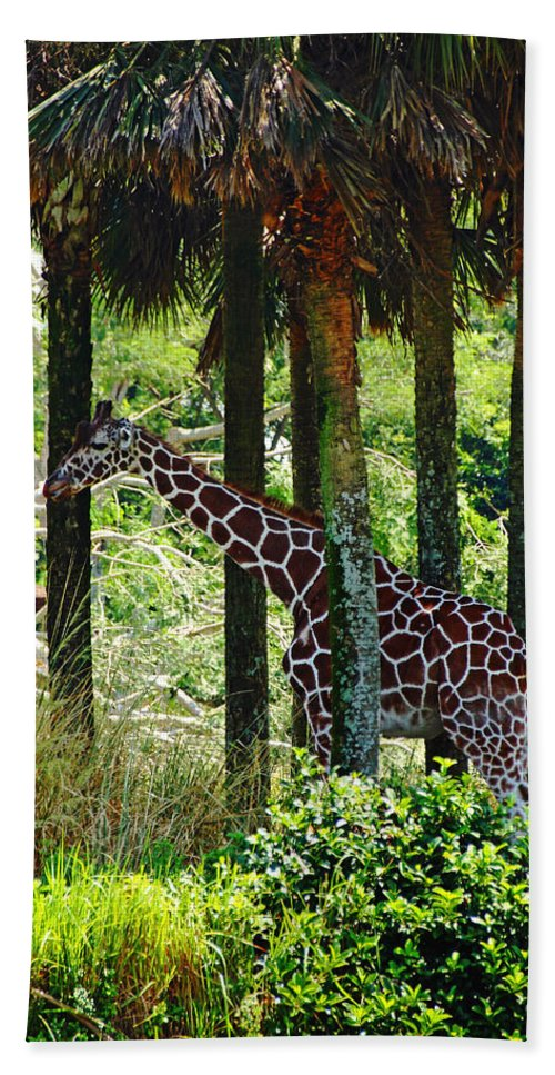 Giraffe Bath Sheet featuring the photograph Camouflage Coat by Debbie Oppermann