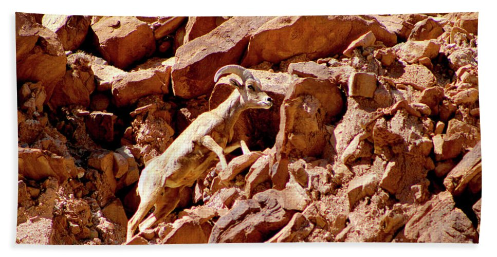 Bighorn Sheep Bath Sheet featuring the photograph Camouflaged Sun-drenched Climb by Dale E Jackson