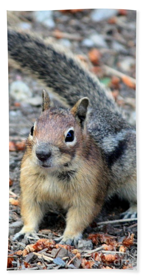 Chipmunk Bath Sheet featuring the photograph Campground Chipmunk by Carol Groenen